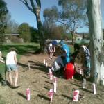 School planting