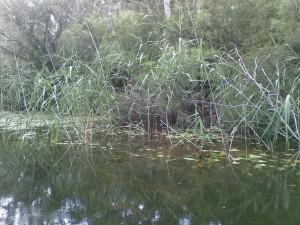 Edwards River Sothn Highlands (3)