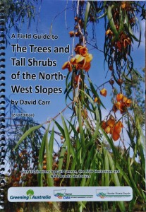 Trees and Tall Shrubs