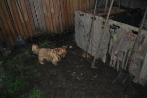 Compost terrier